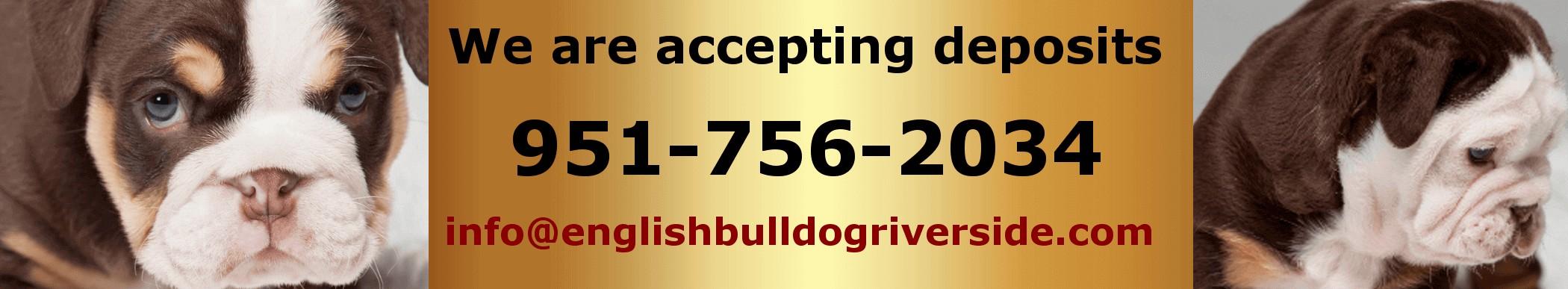 English Bulldog Riverside