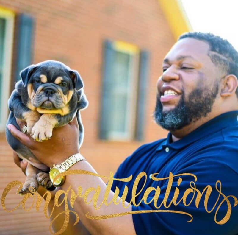 Puppy English Bulldog New Owner