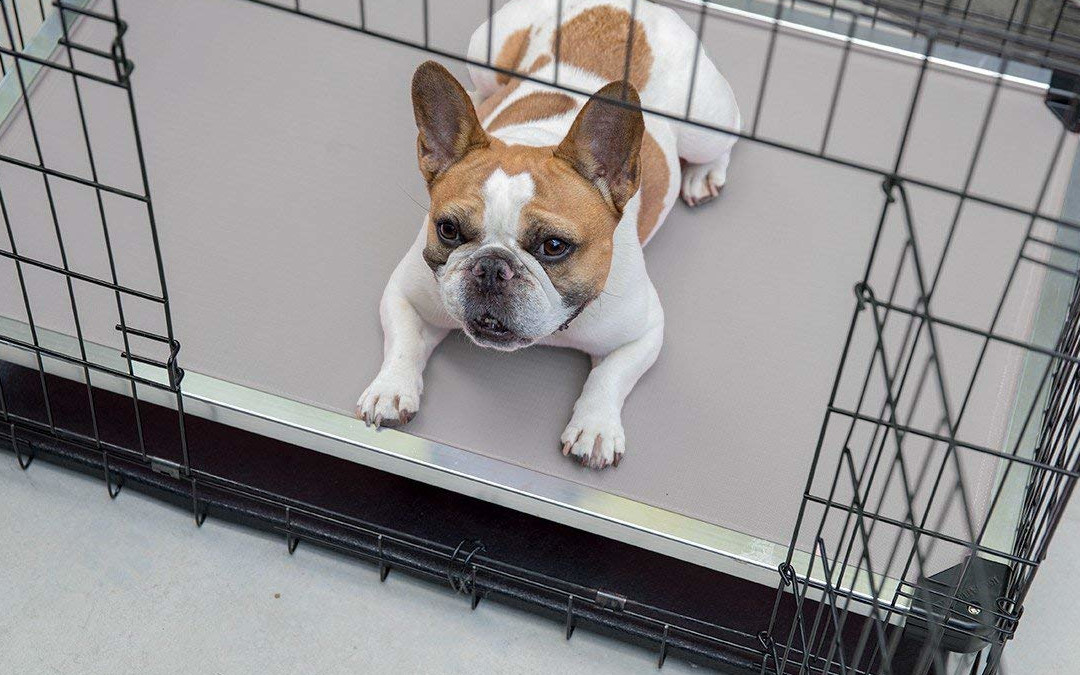 The best puppies and dogs Bulldogs cages 2021