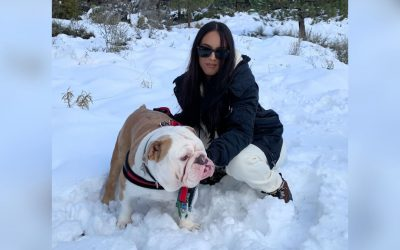 English Bulldogs, Winter Weather Care and Exercise