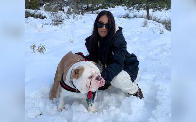 Bulldog Ingles, cuidado y ejercicio en clima invernal