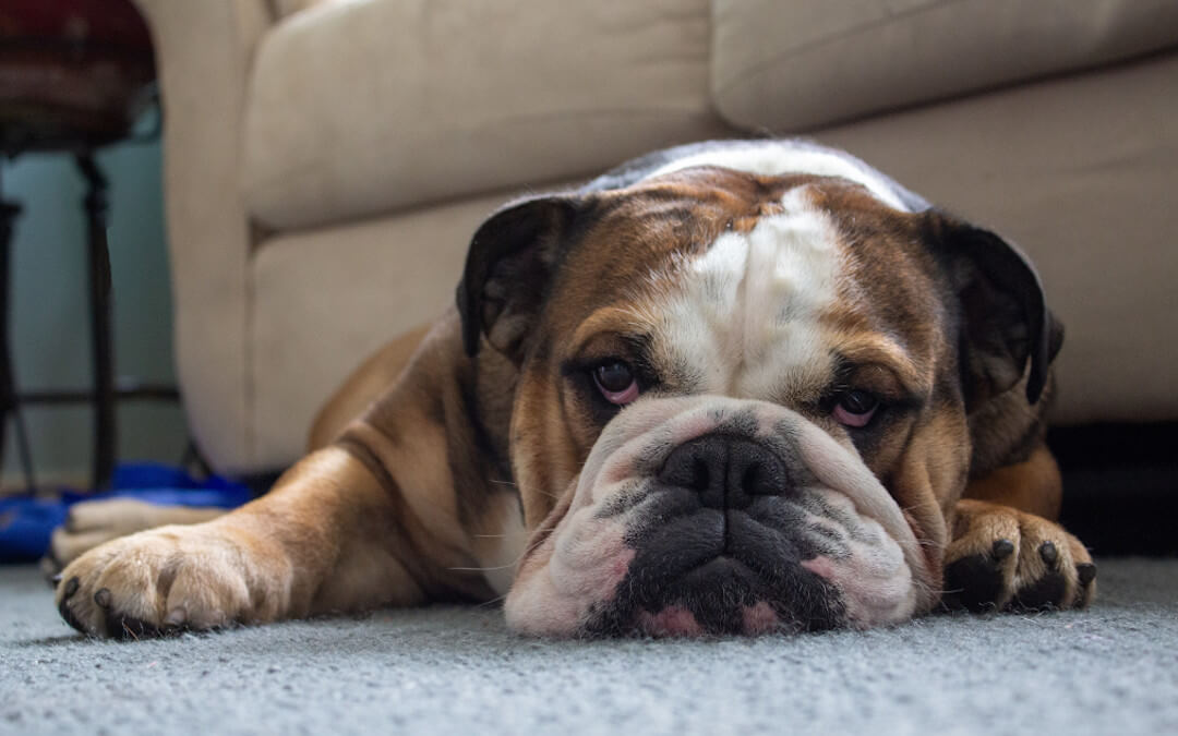 Bulldog Communication