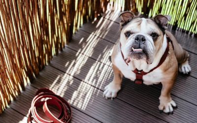 Awesome Apps That Offer Dog Care Tips for First-Time Owners
